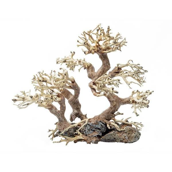 Bilde av Bonsai tree Small Family (25x20x10 cm)